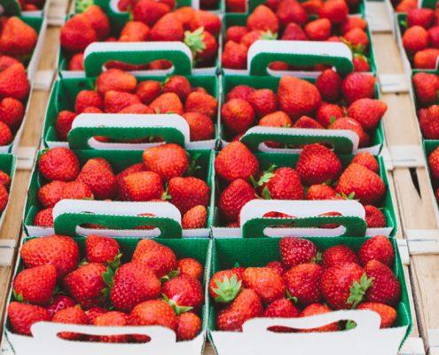 compra de plantas de fresas